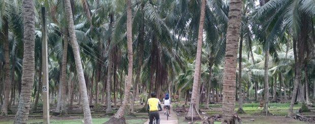 Cycling under coconut canopy MoCay BenTre